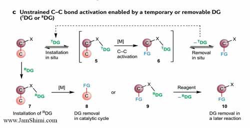 Temporary or removable directing groups enable activation of unstrained C–C bonds