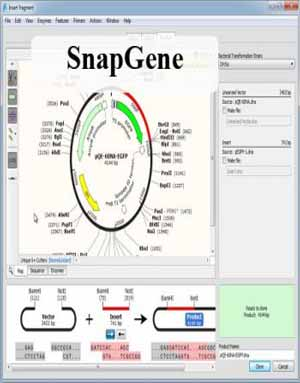 Download SnapGene 5.2.4 Win/ 3.2.1 Mac