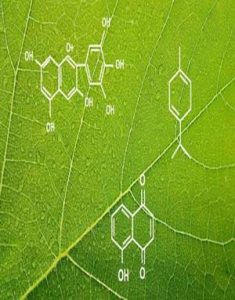 Download Introduction to the Science of Plant Chemistry by Udemy