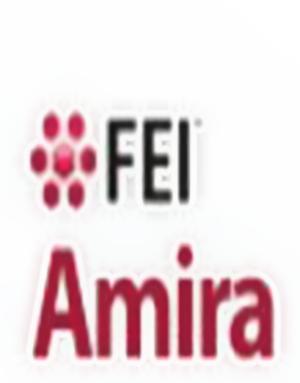 Download FEI Amira 6.0.1 + Crack